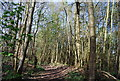 TQ5051 : Footpath in Brockhill Wood by Nigel Chadwick