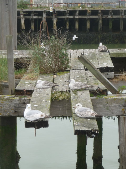 Newhaven: gulls rest on a disused pier at West Quay