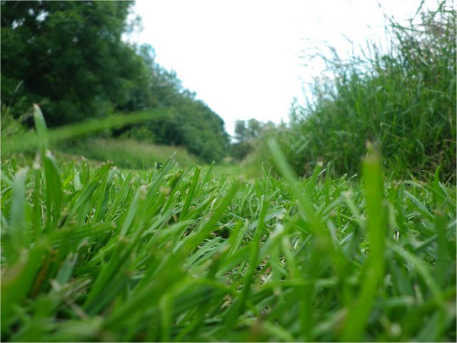 the grass view 169 bethany ascott ccbysa20 geograph