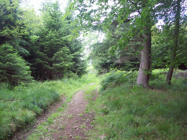 Footpath in Highlow Wood
