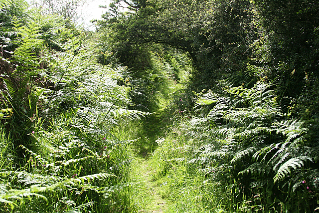 North Bovey: path to the moor