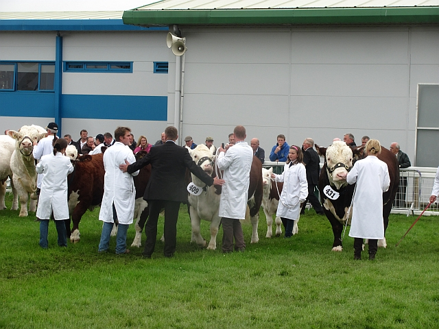 Best beef breed, Royal Highland Show 2011