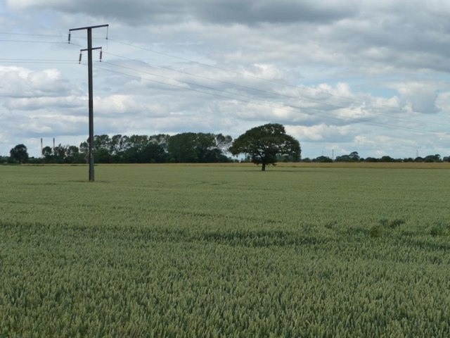 Telegraph pole in a wheatfield