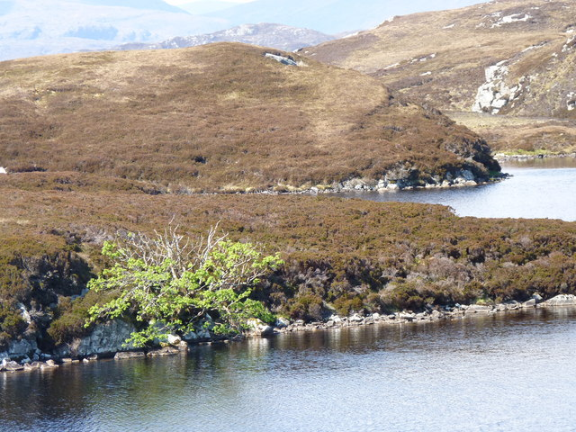 Looking North West across Lochan