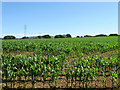 TQ5308 : Pound Field/Ram Field by Simon Carey