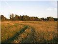 TQ5407 : Site of Medieval Village of Arlington (7) by Simon Carey