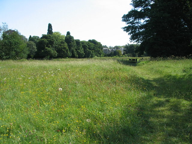 Wild flower meadow, Coombe Park