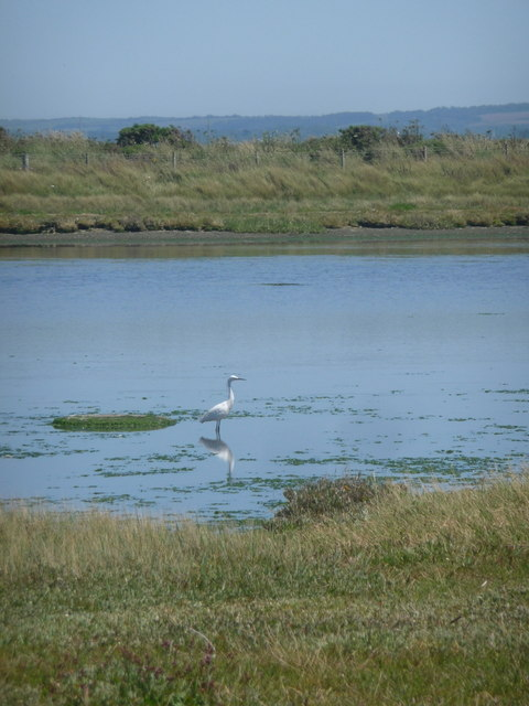 Milford on Sea: heron on Sturt Pond