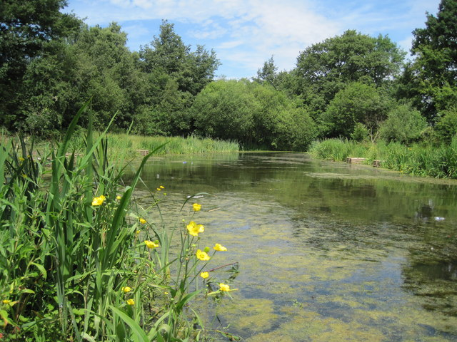 Pond in Mill Wood