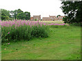TG1903 : Clusters of rosebay willowherb on Swardeston Common by Evelyn Simak