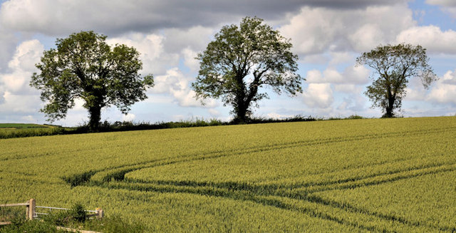 Trees and field near Comber
