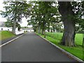 H9458 : Tree-lined avenue, Tartaraghan Parish Church by Kenneth  Allen