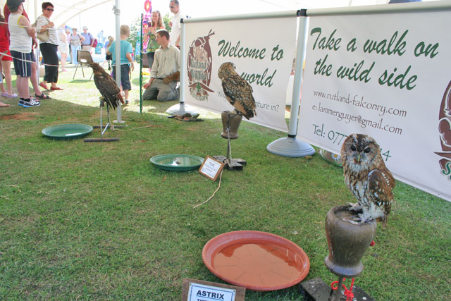 Rutland Falconry at the Four Winds Festival, Rutland Water