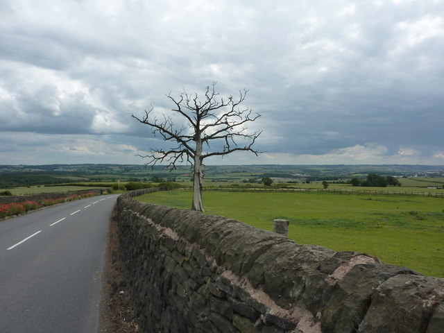 Dead elm tree in field