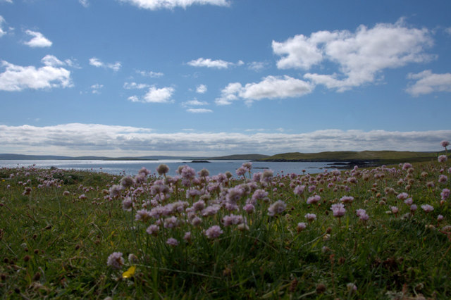 Thrift on Cumlins, Heoga Ness