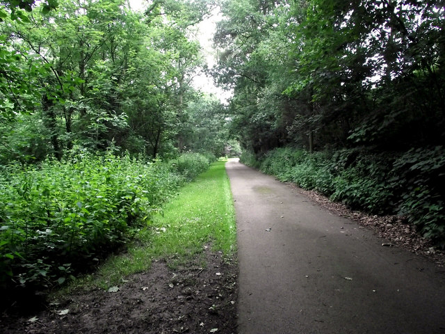 Along the lane