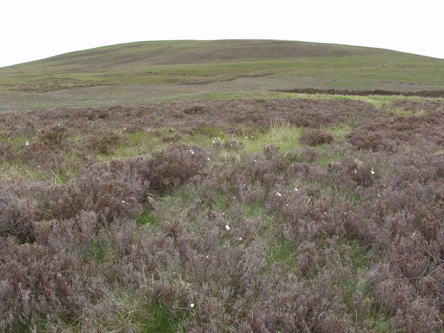 Heather and cotton grass by the Achentoul Burn