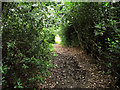 SJ8957 : Holly tunnel by Jonathan Kington