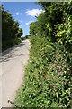 SW5630 : Lane near Colenso by Elizabeth Scott