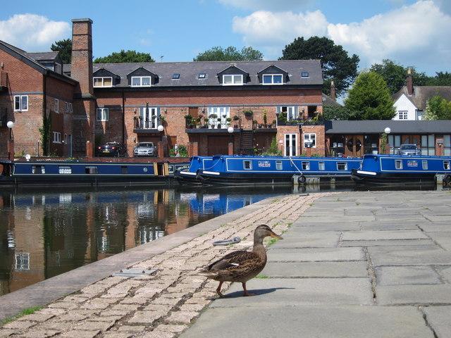 Duck at Market Harborough Union Wharf