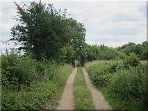 SP9420 : Track off Slapton Lane by Oast House Archive