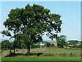 SE2113 : Tree on a field boundary by Christine Johnstone