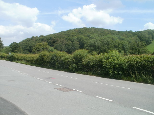 Wooded hillside near Llanwrda