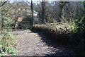 TQ5940 : Path through Hilbert Wood by N Chadwick
