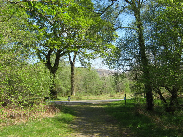 The path meets the road, Caldons Wood