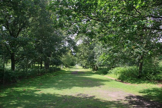 The Deer Park at Dunham Massey