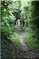 SW5629 : Bridleway between hedges by Elizabeth Scott