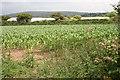 SW5629 : A cultivated field near Greenberry by Elizabeth Scott