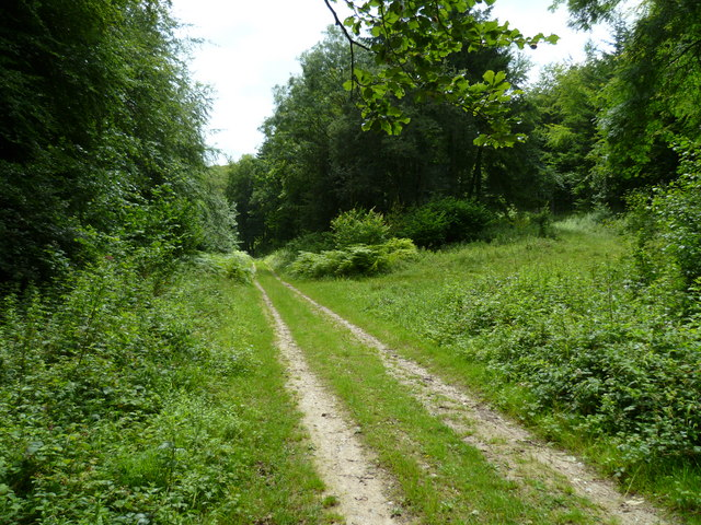 Straight stretch of bridleway in Eastdean Wood