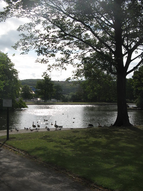Canada Geese at Hillsborough Park