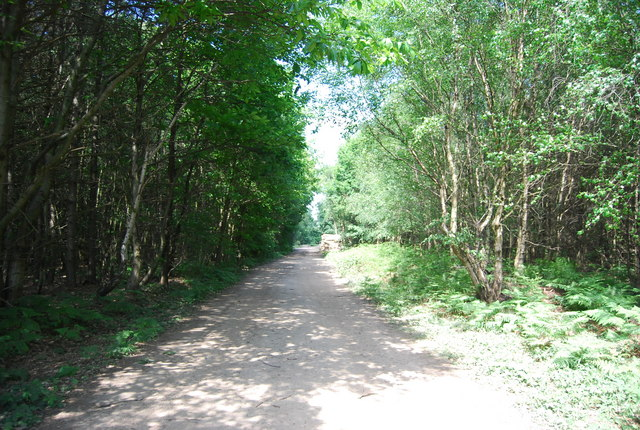 Track, Mereworth Woods