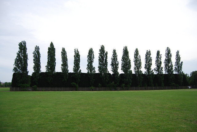 Trees hiding the Athletics Track, Wimbledon Park
