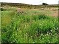 SE0436 : Brow Moor [2] by Christine Johnstone