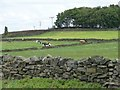 SE0436 : Cows grazing in walled field by Christine Johnstone