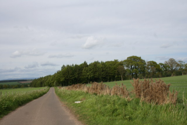 Fields and Trees by Gardyne