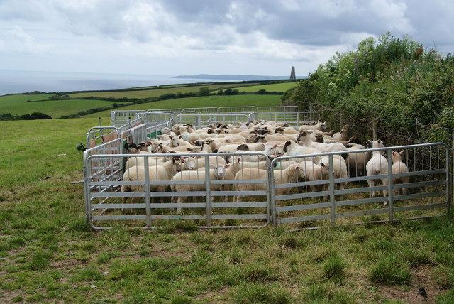Sheep in their pen © Bill Boaden cc-by-sa/2.0 :: Geograph ...