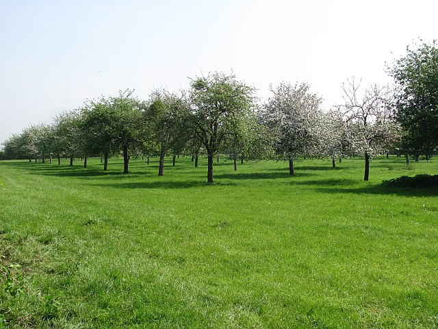 Orchard, Baltonsborough