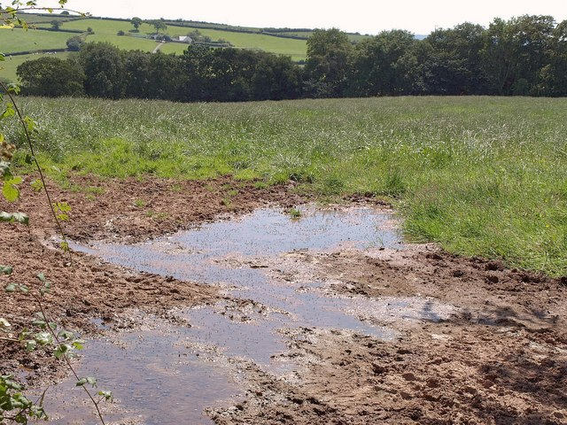 Flies and puddles near Stoney Lane Cross