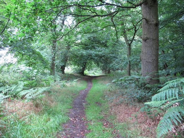 Footpath through Cutler's Wood