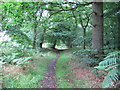 TM1538 : Footpath through Cutler's Wood by Roger Jones