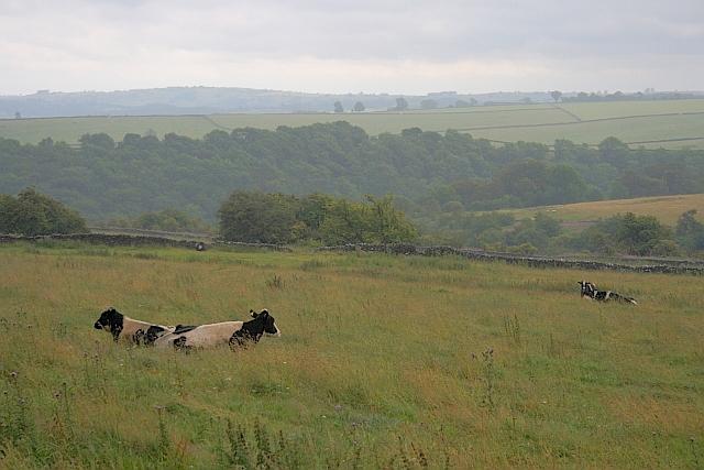 Over Haddon Fields