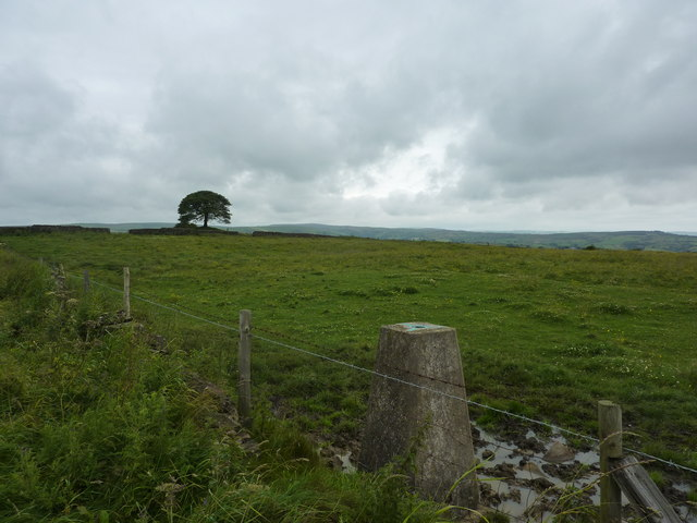 Trig point and tree, Grindon Moor