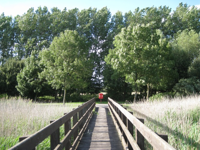 Footbridge over a reedbed 