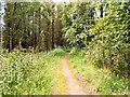 SD6917 : Path through Charter's Moss Plantation by David Dixon