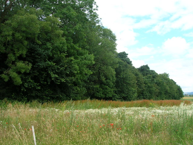 Willwick Hill Plantation