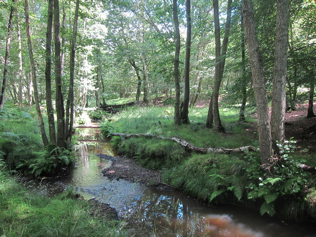 Stream through Birch Wood
